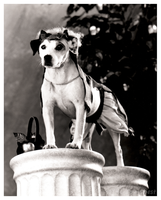 Wishbone Press Photo - Hercules by The-Toy-Chest