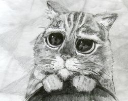 CUTE CAT by Speed Dawing Italia by Speeddrawingitalia