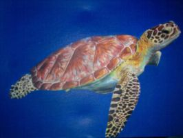 Sea Turtle by Catherine1992