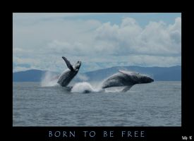 Born To Be Free by diver420