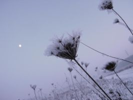 Cold Winter Evening by CiNiTriQs