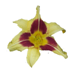 Yellow Flower .PNG cutout by watergal28-stock