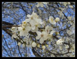 Spring in the city no.3 by 99-in-the-shade