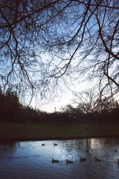 Dusk by the pond by CathleenTarawhiti