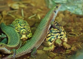 Reptiles or only Amniotes by Nesihonsu