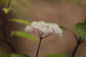 little mountain flowers by rayna23