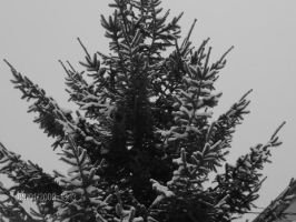 snow6 by ligthinthedarkness