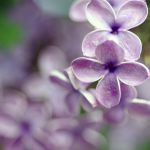 lilac meets green 4 by MorkOrk