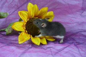 Smelling the Flower! by Shutterbug0629