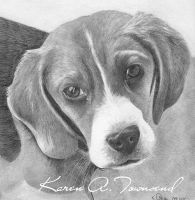 Beagle by Karentownsend