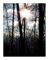 Sun behind the trees by toko