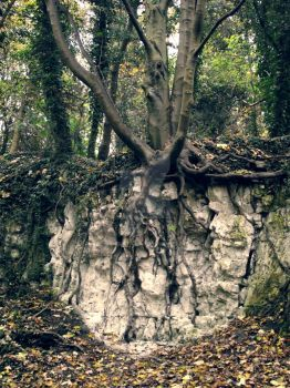 Creeping Roots by CloudyCosmos
