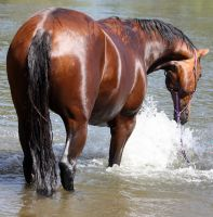 Horseys River 158 by aussiegal7