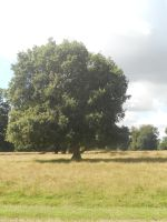 Petworth House and Park 095 by VIRGOLINEDANCER1