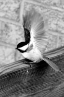 CHickadee Wings by blairsgal