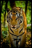King of the Jungle by ragilz666