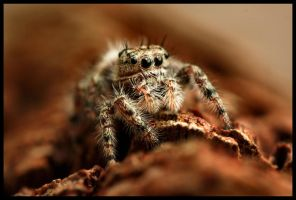 Sneaky Jumper by FramedByNature