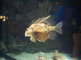 Lionfish by harbinger-stock