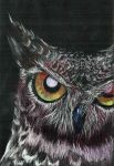 Quick Drawing: Owl by balonyshow