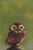 Cute Owl 2 by SEBASEBS