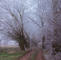 Willows V by starykocur