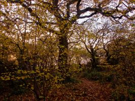 Late Autumn Afternoon in the Woods by davepphotographer