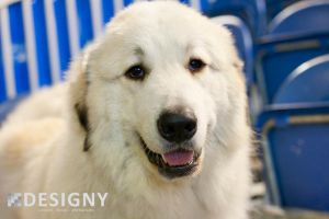Great Pyrenese by Designy