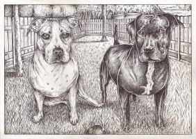 Bullet and Gucci pet dogs (bic pen drawing) by Pen-Tacular-Artist
