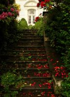 Stairway of Roses by Atle