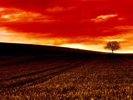 Red afternoon by pAnAi5