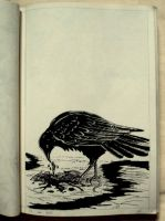 (11) Crow by oodell