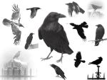The Raven_s by midnightstouch