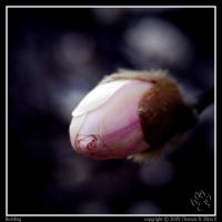 Budding by TRE2Photo-n-Design