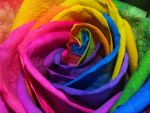 Rainbow Roses II by Squiddgee7734