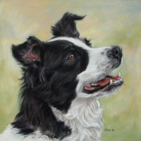 border collie by Eline-portraits