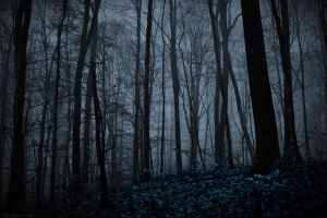Night Forest by LillianEvill
