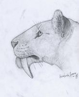 Smilodon fatalis head by MunenMusho