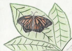 Butterfly resting on leaves by artlady87