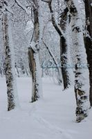 winter Forest 1 by Woolpix