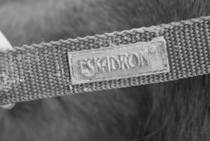 Horse brand by Photoslick