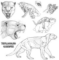 Thylacoleo carnifex sketches by viergacht