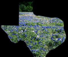 Bluebonnets thru Texas by Dyslexic-Ferret