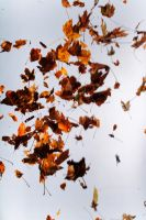 Floating leaves 001 by ISOStock
