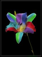colourful flower by Ellie--Jelly