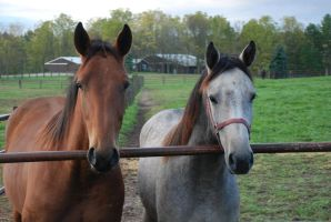 Yearlings1 by EquestrianPassion