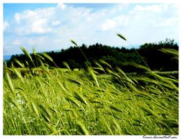 Fields of rye by Korni