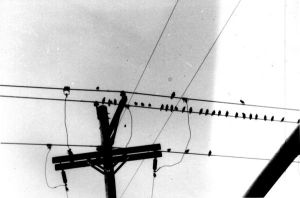 birds on a wire by invisibletape