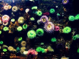 Sea Anemones by audreyhepburnluv97