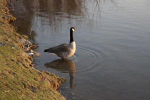 Mother Goose by MaryahDPhotography