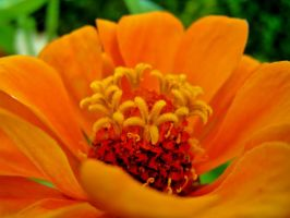 orange flower. by DreyerDan
